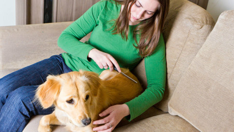 Benefits of Grooming your Dog's coat and nails