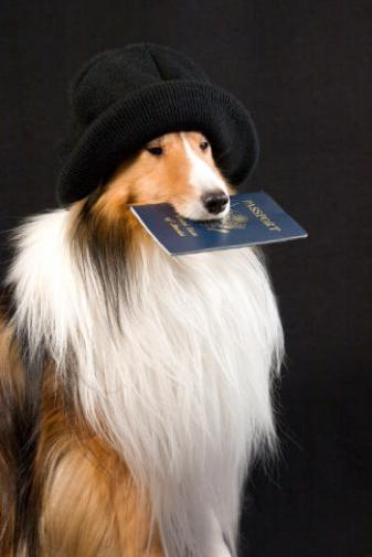 petpassport